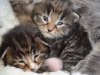 2-semaines-iron-cat-et-idyie-1
