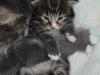 2-semaines-iron-cat