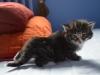 3-semaines-iron-cat-1
