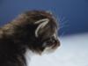 3-semaines-iron-cat-2