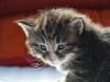 3-semaines-iron-cat-5