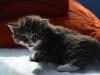 3-semaines-iron-cat-6