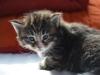 3-semaines-iron-cat-8