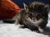 3-semaines-iron-cat-9