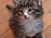 5-semaines-iron-cat-1