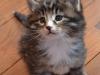 5-semaines-iron-cat-2