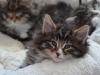 7-semaines-iron-cat-1