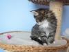 7-semaines-iron-cat-10