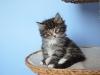7-semaines-iron-cat-4
