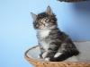 7-semaines-iron-cat-6
