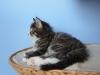 7-semaines-iron-cat-7