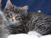 8-semaines-iron-cat-1