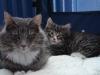 8-semaines-iron-cat-2