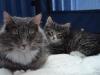 8-semaines-iron-cat-3