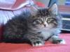 8-semaines-iron-cat-4