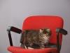 8-semaines-iron-cat